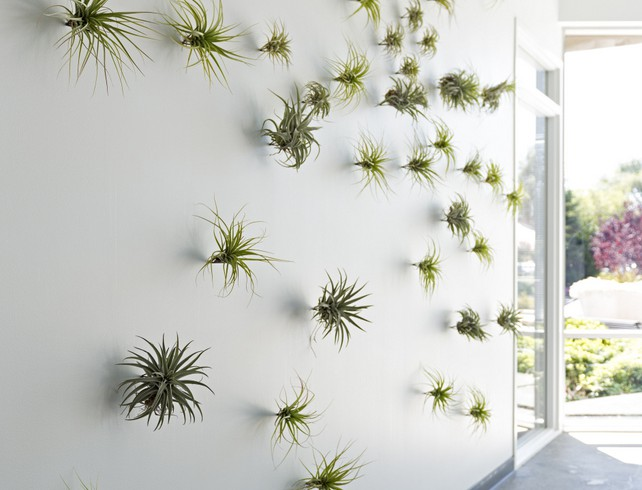 Evernote plantas pared
